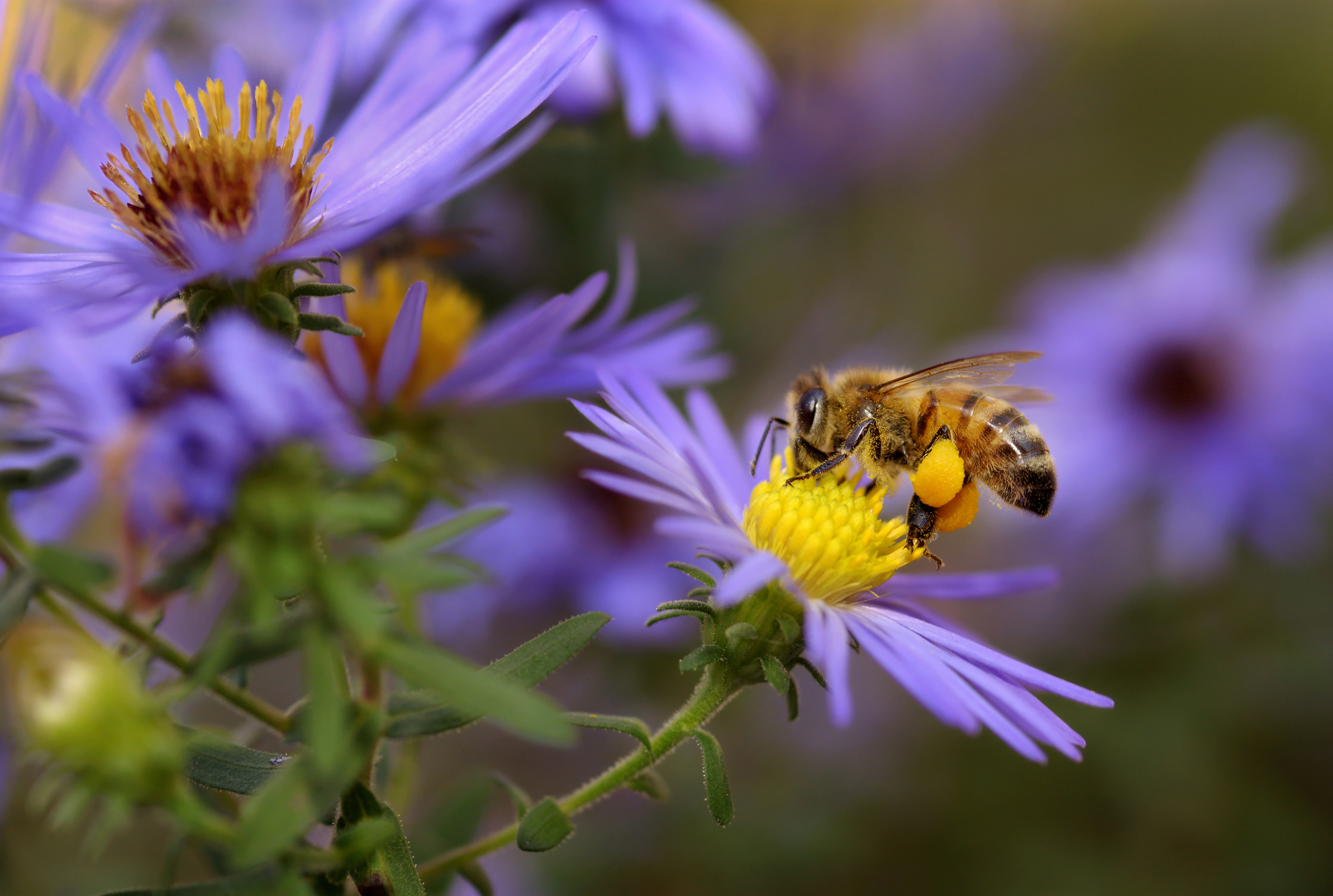 Teen Craft Kits to Go: Bee Gardens