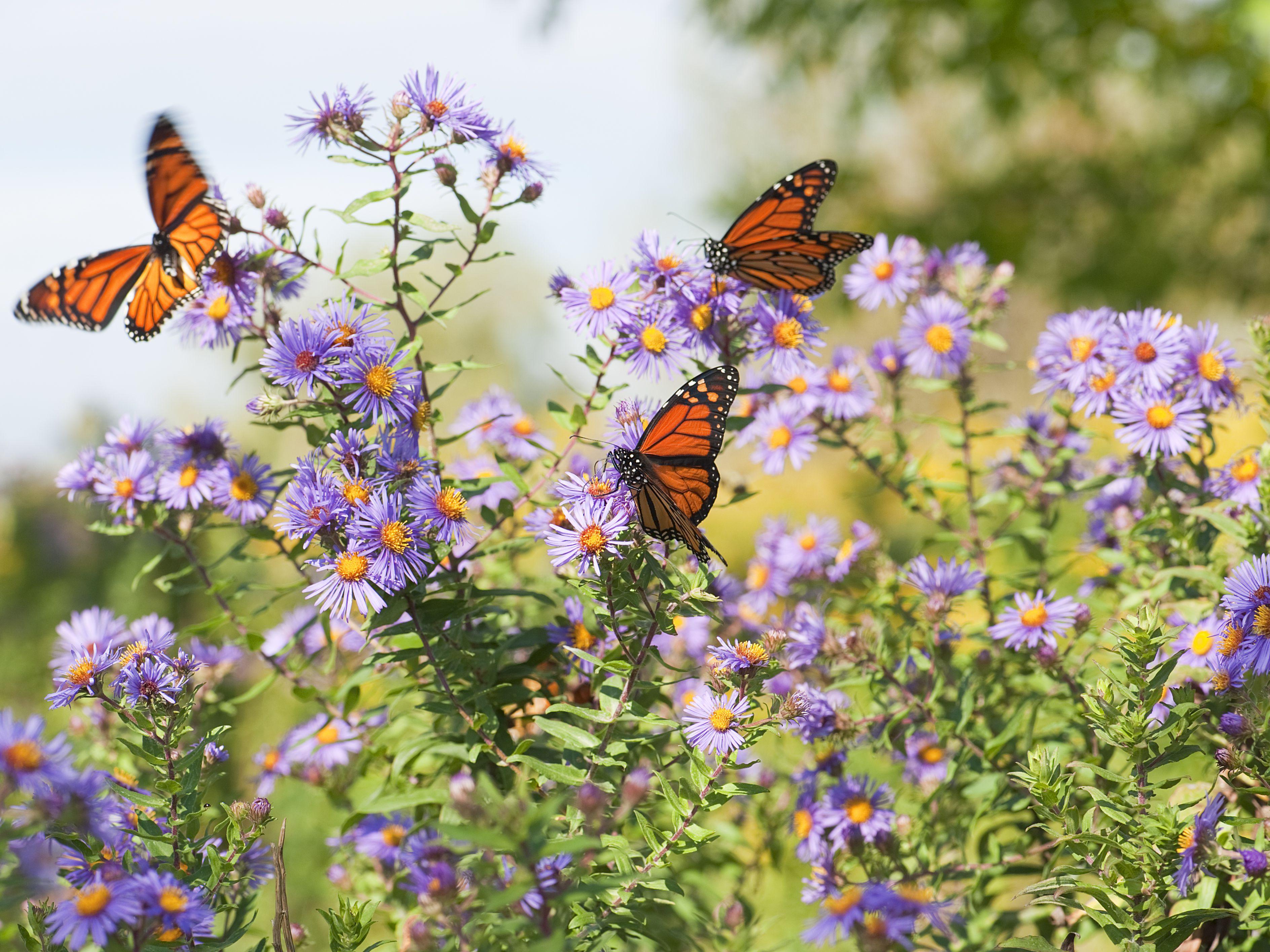 Beckoning Butterflies (via Zoom)