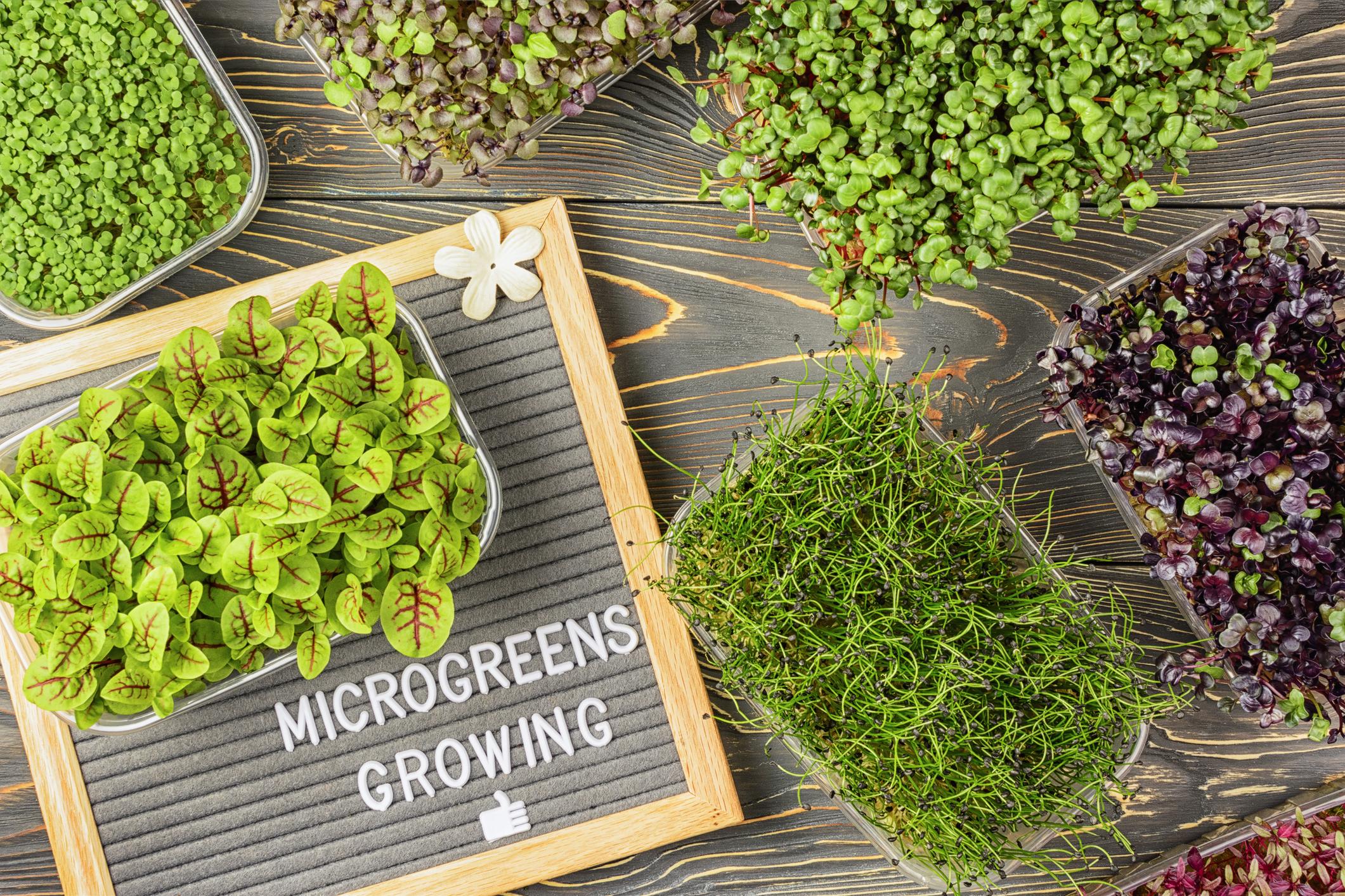 Adult Craft Kits to Go: Microgreens