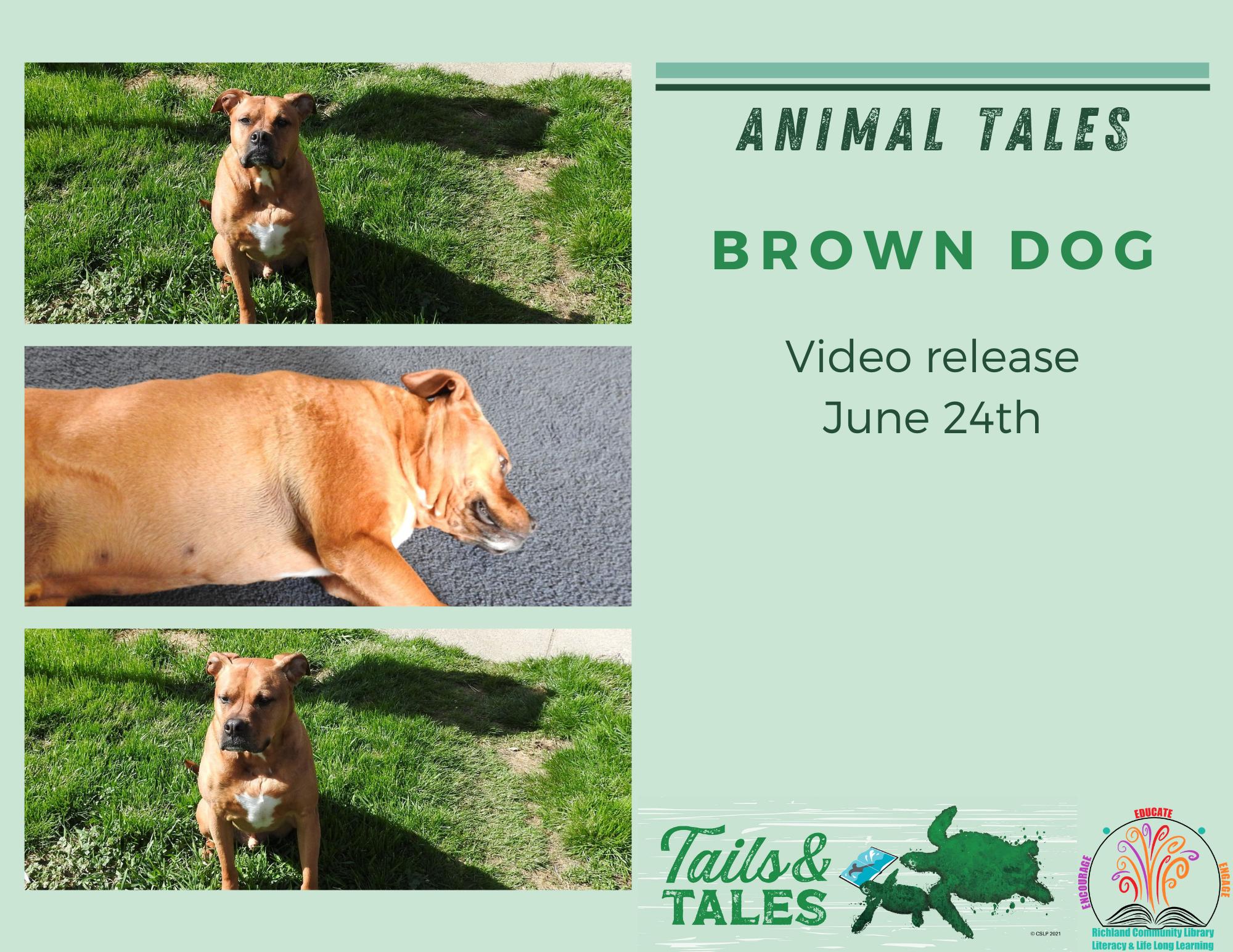 Animal Tales Video
