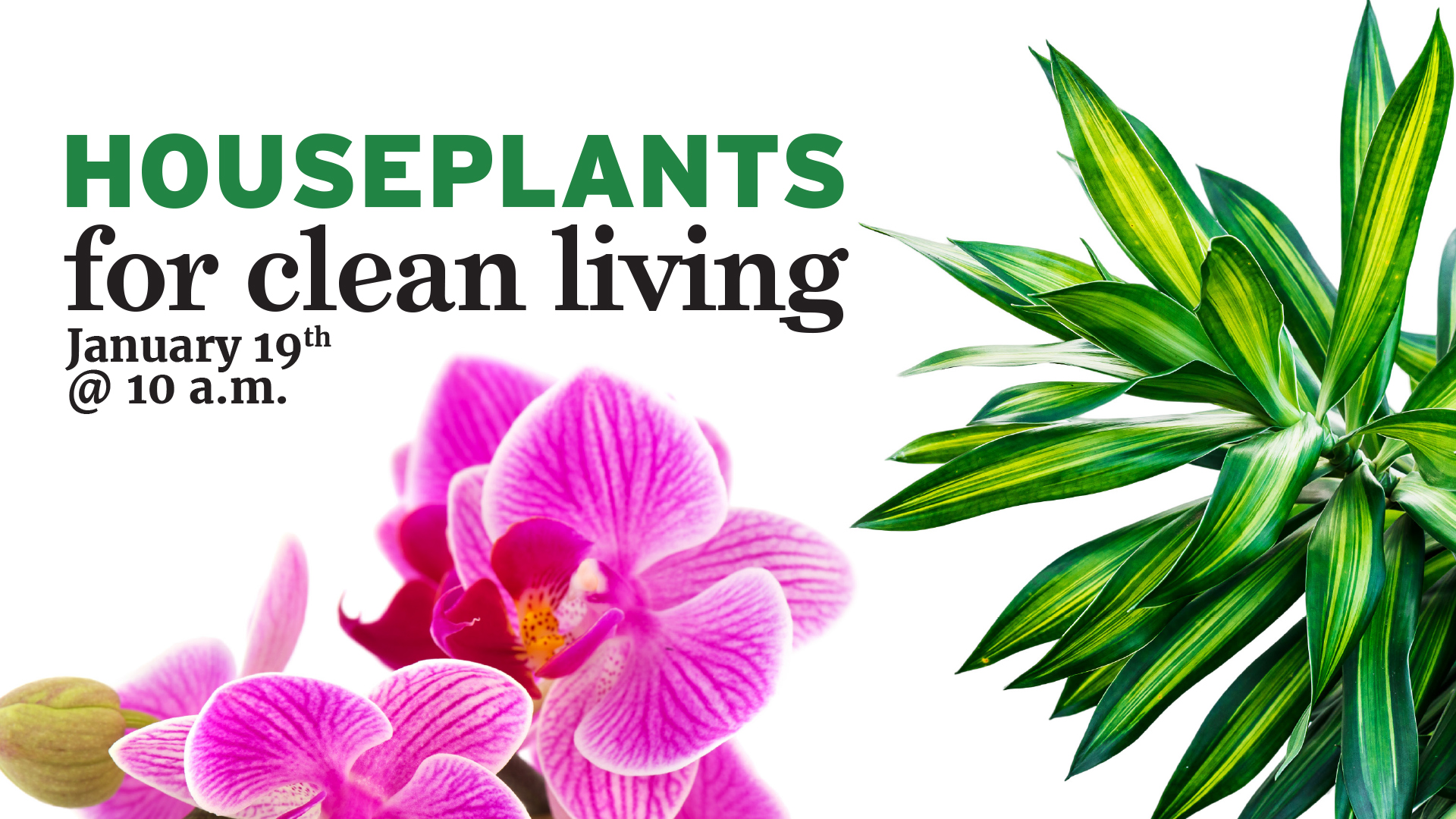 Houseplants for Clean Living
