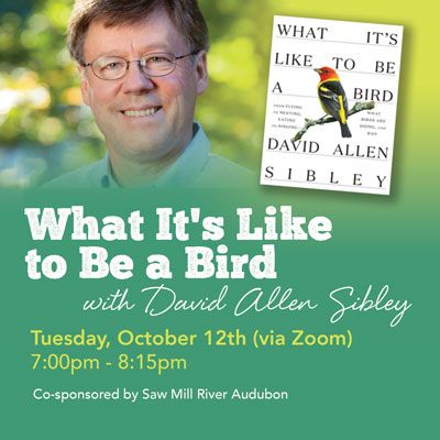 What It's Like to Be a Bird with David Allen Sibley