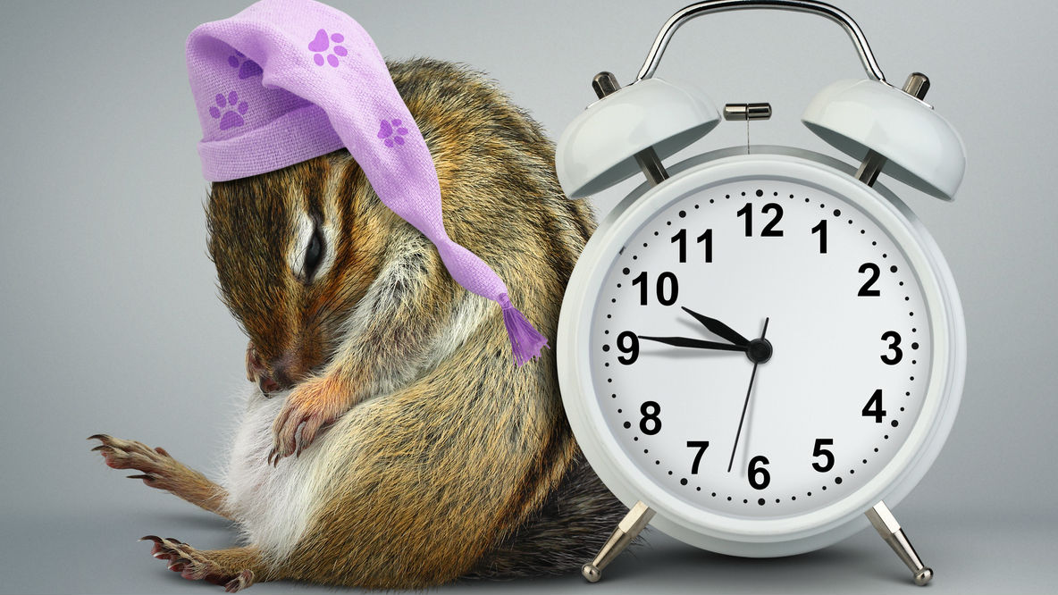 Family Storytimes @ the Museum: Time to Hibernate
